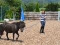 Pony longieren - Ponyreiten Würenlos