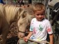 Pony und Kind - Ponyreiten Würenlos