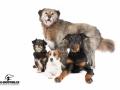 Hunde des Hundezentrums - Ponyreiten Würenlos