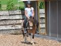 Ponyreiten - Ponyreiten Würenlos